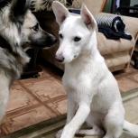 Бэла - собака, которая любит всех!, Новосибирск