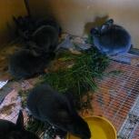 кролики РЭКС, Новосибирск