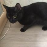 Найдена черная кошка, Новосибирск
