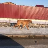 Кто потерял собаку, Новосибирск