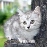 Котятки в добрые ручки!, Новосибирск