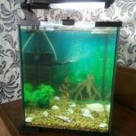 Аквариум Aquael Shrimp Set 20 литров, Новосибирск