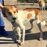 Трогательная собачка Бэтти ждет своего хозяина в приюте, Новосибирск