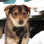 Джек 1-1,5 года в будку в частный дом, Новосибирск