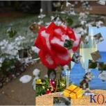 Интерактивный пол и 108 эффектов для бесконтактного праздника, Новосибирск