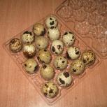 Продам пищевое и инкубационное яйцо, Новосибирск