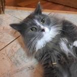 Отдадим  молодого кота 1 год, Новосибирск