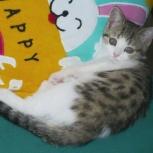 Потерялся котенок, Новосибирск