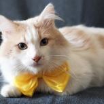 Пушистик кот Марсик, Новосибирск