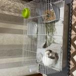 Декоративный кролик и все принадлежности для него!, Новосибирск