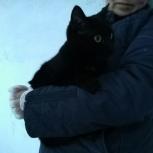 Добрый кот в добрые руки, Новосибирск