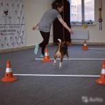 Дрессировка, хэндлинг, зал для занятий с собаками, Новосибирск