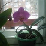 Орхидею, Новосибирск