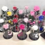 Розы в колбе в Розницу Арт 45645645, Новосибирск