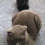 Маленький черный котенок ищет свой дом, Новосибирск