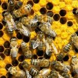 Рои пчел, Новосибирск