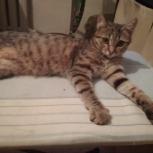 Отдам красотку кошку в добрые руки, Новосибирск