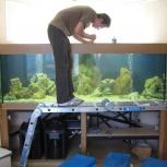 Профессиональное обслуживание и дизайн аквариумов, Новосибирск
