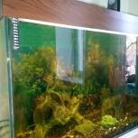 аквариум на 240 литров!, Новосибирск