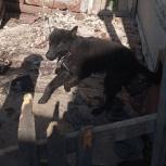 Мальчик ищет дом, Новосибирск