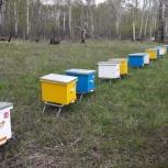 Продам пчелопакеты в Искитимском районе, Новосибирск