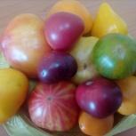 Семена томатов, Новосибирск