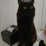 Черный красавец в поисках дома, Новосибирск