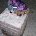 Зимний комбинезон на маленькую собачку, Новосибирск