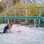 Курс дрессировки собак, Новосибирск