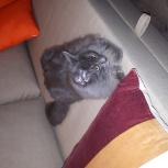 Пропал серый кот, Новосибирск