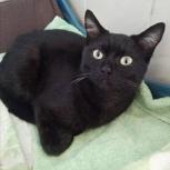 Найден черный  кот, Новосибирск