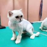 Стрижка кошек «Грумер», Новосибирск
