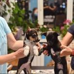 Отдам чудесных щенков в добрые руки бесплатно, Новосибирск