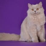 Кошечка от чемпиона мира, Новосибирск