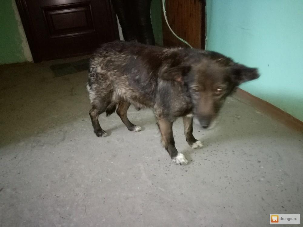Куда подать объявление о пропаже собаки в новосибирске доска бесплатных объявлений стройматериалы москва