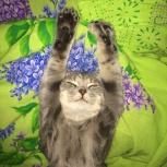 Продам кота, Новосибирск