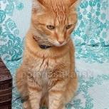 Потерялся рыжий кот в Бердске, Новосибирск