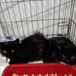 Котята ищут дом, Новосибирск