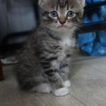 Даром в добрые руки котят, Новосибирск
