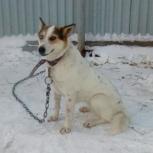 Собака-обнимака Белочка - самым лучшим хозяевам, Новосибирск
