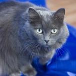 Кошка - принцесса, Новосибирск