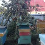 Мёд со своей пасеки, Новосибирск