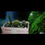 Флорариум,композиции из комнатных растений,авторские открытки., Новосибирск