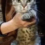 Кошка, Новосибирск