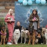 Дрессировка собак nsk dogs, Новосибирск