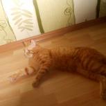 Няня для зверят ( квартирная зоопередержка ), Новосибирск