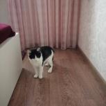 Найден котенок., Новосибирск