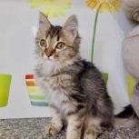 Котенок в добрые ручки, Новосибирск
