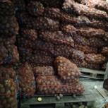 Продам картофель белый Гала оптом, Новосибирск