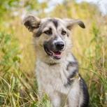 Собака в добрые руки, Новосибирск